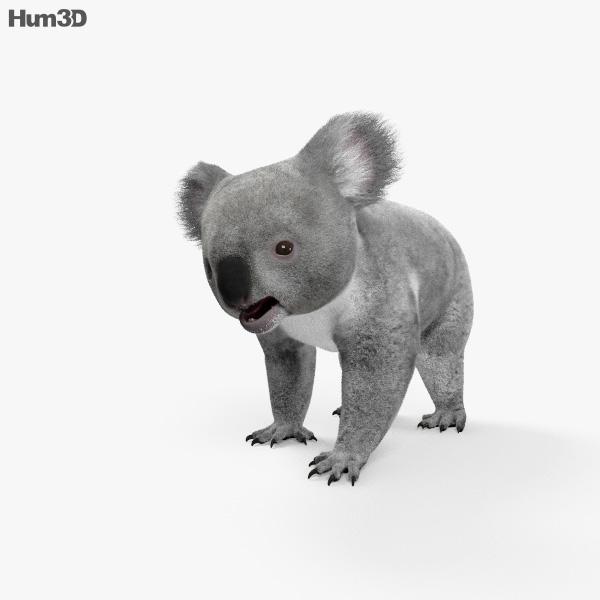 3D model of Koala HD