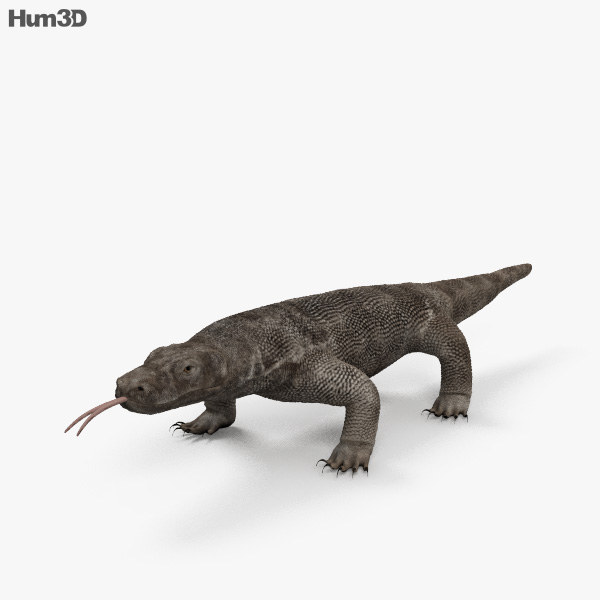 Komodo Dragon HD 3D model