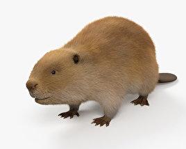 3D model of Beaver HD