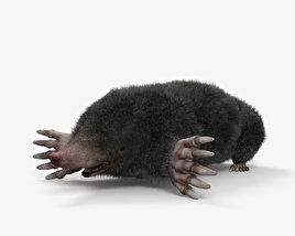 3D model of Eastern Mole HD