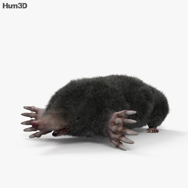 Eastern Mole HD 3D model