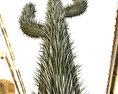 Cactus Free 3D model
