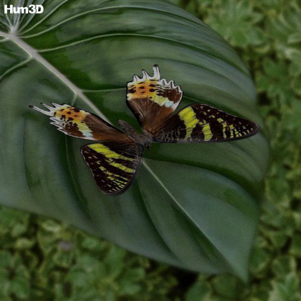Madagascan Sunset Moth 3d model