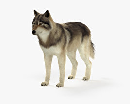 3D model of Gray Wolf HD