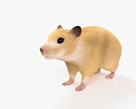 3D model of Hamster HD