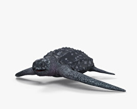 3D model of Leatherback Sea Turtle HD