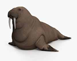 3D model of Walrus HD