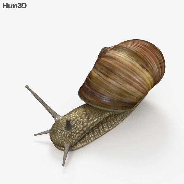 3D model of Snail HD