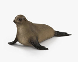 3D model of Brown Fur Seal HD
