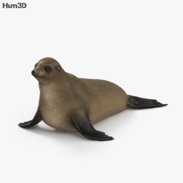 Brown Fur Seal HD 3D model
