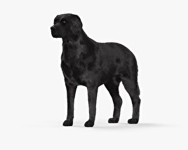3D model of Labrador Retriever Black HD