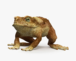 3D model of Cane Toad HD