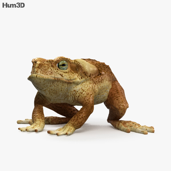 Cane Toad HD 3D model