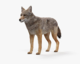 Golden Jackal HD 3D model