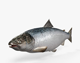 3D model of Atlantic Salmon HD