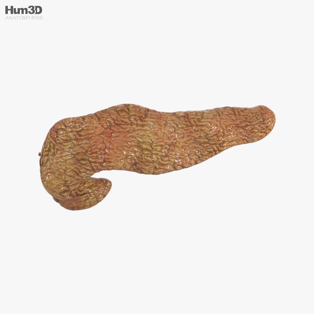 Human Pancreas 3D model