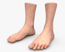 3D model of Male Foot