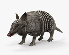 3D model of Armadillo HD