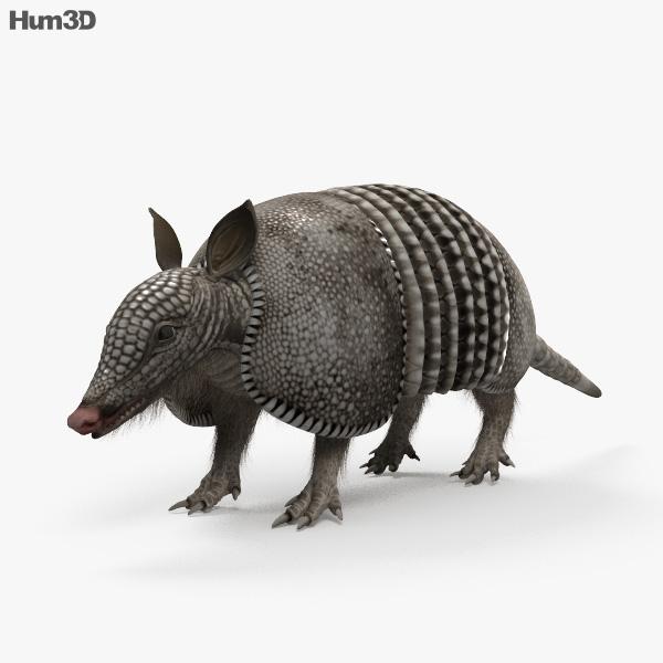 Armadillo HD 3D model