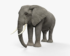 3D model of African Elephant HD