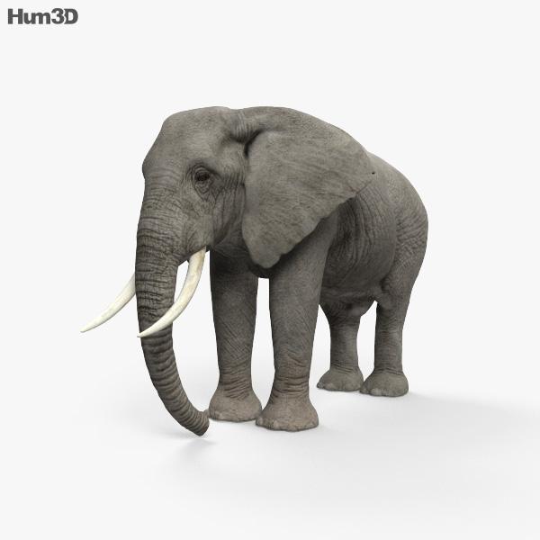 African Elephant HD 3D model