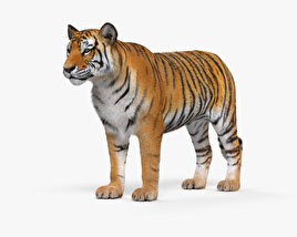 3D model of Tiger HD