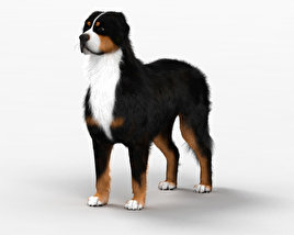 Bernese Mountain Dog HD 3D model