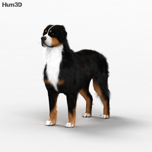 Bernese Mountain Dog HD 3D model