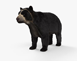 3D model of Spectacled Bear HD