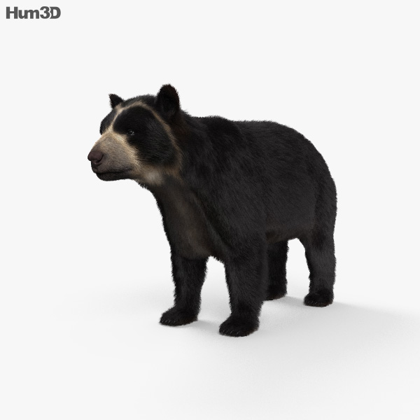 Spectacled Bear HD 3D model