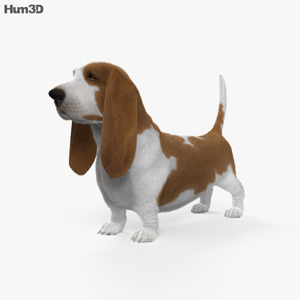 Basset Hound HD 3D model