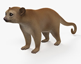 Kinkajou HD 3D model