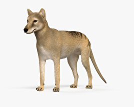 Thylacine HD 3D model