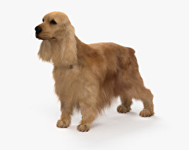 3D model of English Cocker Spaniel HD