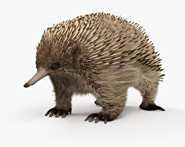 3D model of Echidna HD