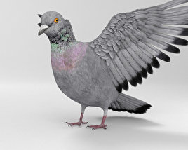 3D model of Rock Dove HD