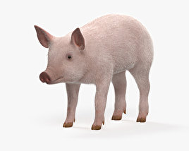 3D model of Piglet HD