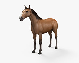 3D model of Horse HD