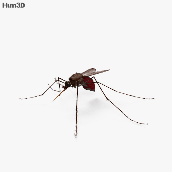 Mosquito HD 3D model