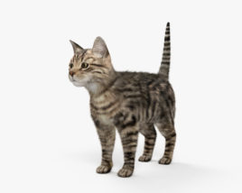 3D model of Cat HD