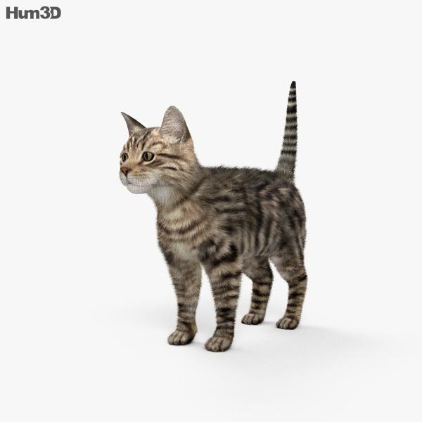 3D model of Cat HD