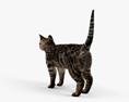 Gatto Modello 3D
