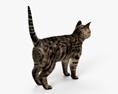 Cat HD 3d model