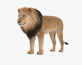 3D model of Lion HD