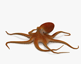 3D model of Common Octopus HD