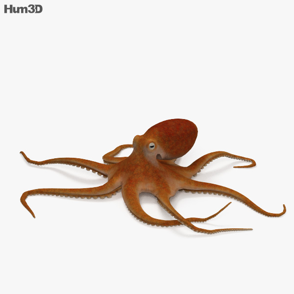 Common Octopus HD 3D model