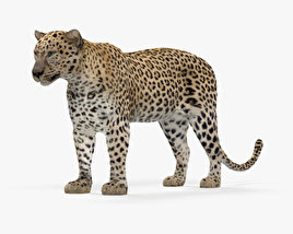 3D model of Leopard HD