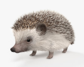 3D model of Hedgehog HD