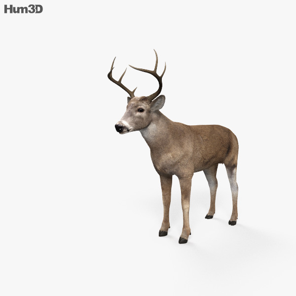 White-Tailed Deer HD 3D model
