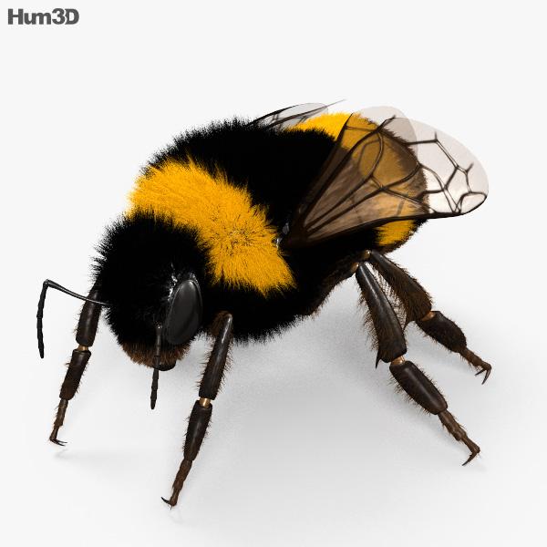 Bumblebee HD 3D model